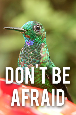 Don't Be Afraid - Google Hummingbird helps local SEO for good small businesses