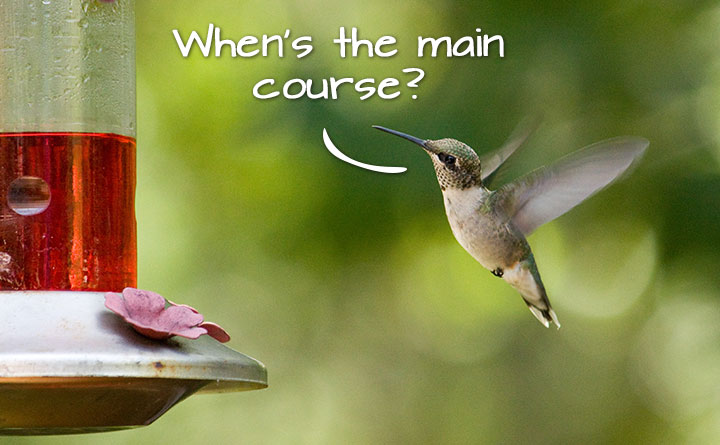 when's the main course? Google's Hummingbird has a high metabolism