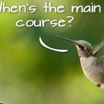 Is Hummingbird Good for your Business?